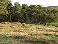 Small plantation on Eglwyseg Mountain - geograph.org.uk - 243785.jpg