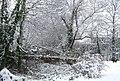Snowbridge. - geograph.org.uk - 451931.jpg