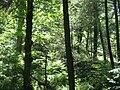 Snyder Middleswarth NA Woods.jpg