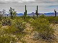 Sonoran Desert National Monument.jpg