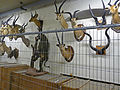 Sous-sols du Musée royal de l'Afrique centrale (6).jpg