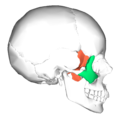 Sphenoid bone and zygomatic bone - lateral view.png