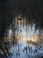 Spiegelbild des Himmels und von Gräsern auf einer Wasseroberfläche im Naturschutzgebiet Leyhörn in Niedersachsen.jpg
