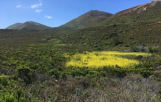 Rancho Cañada de los Osos y Pecho y Islay - Site of the historic Pecho Ranch Reservoir, Reservoir Flats Trail, Montaña de Oro State Park