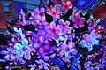 Spring Cherry Blossom Tree (16967893386).jpg