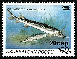 Stamps of Azerbaijan, 2006-728.jpg
