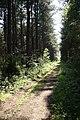 Stapleford Woods - geograph.org.uk - 1391483.jpg