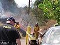 Starr-090709-2497-Thespesia populnea-habit with brush fire-Puamana-Maui (24850194802).jpg