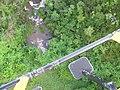 Starr-141014-5106-Caesalpinia decapetala-aerial view stream-Kakipi Gulch Haiku-Maui (25247456935).jpg