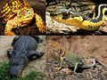 State reptile collage cropped.jpg