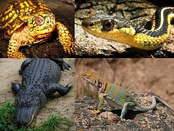 Collage of four U.S. state reptiles showing a ...