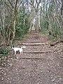 Steps on footpath - geograph.org.uk - 1177060.jpg