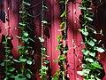 Still Life with Leaves on String - Poltava - Ukraine (42920316225).jpg