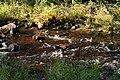Stream to Lake Superior (1450018798).jpg