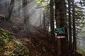 Sun rays through trees, Dürrenstein.jpg