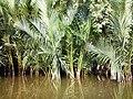 Sundarban (61).jpg