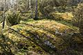 Sunlight and shadows on a moss-covered cliff in.jpg
