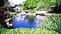 Sunny Walter-Pillings Pond.jpg