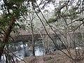 Suwannee River, White Springs Bath site.JPG
