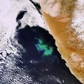 Swirls of a plankton bloom captured by Envisat ESA204138.tiff