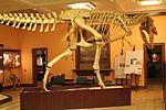 Tarbosaurus Warsaw2.jpg