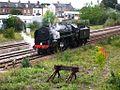 Taunton - 70000 light engine Exeter to Bishops Lydeard.jpg