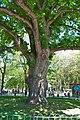 Tavrida oak1.jpg
