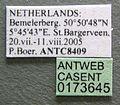 Tetramorium impurum casent0173645 label 1.jpg