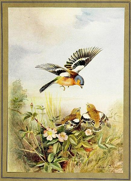 File:The British bird book (1921) (14568938048).jpg