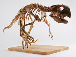 The Childrens Museum of Indianapolis - Psittacosaurus skeleton cast.jpg