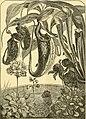 The aquarium (1893) (19558300948).jpg