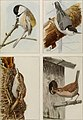 The book of birds; common birds of town and country and American game birds (1921) (14565852108).jpg