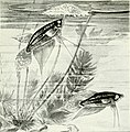 The complete aquarium book; the care and breeding of goldfish and tropical fishes (1936) (20483748590).jpg