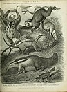 The cyclopaedia; or, Universal dictionary of arts, sciences, and literature. Plates (1820) (20821173565).jpg