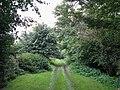 The track to Baddox Wood - geograph.org.uk - 575656.jpg
