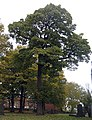 This tree's not for turning - geograph.org.uk - 1036409.jpg