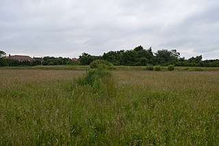 Thornwood Common Flood Meadow Protected area in Essex, England