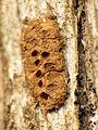 Tiny Clay Nest (16413905242).jpg