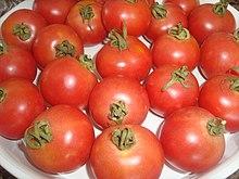 Verdura Wikipedia La Enciclopedia Libre Se obtiene de plantas que crecen de una semilla de patata en un huerto mediano o en un huerto grande. verdura wikipedia la enciclopedia libre