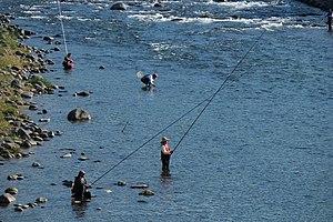 Ayu fishing - Ayu fishing in Japan.