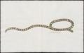 Tortrix scytale - 1700-1880 - Print - Iconographia Zoologica - Special Collections University of Amsterdam - UBA01 IZ11400013.tif
