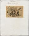 Tortrix scytale - 1700-1880 - Print - Iconographia Zoologica - Special Collections University of Amsterdam - UBA01 IZ11400041.tif