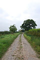 Track on Lois Farm - geograph.org.uk - 578116.jpg