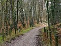 Trackbed through the forest - geograph.org.uk - 1629448.jpg