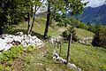 Trail in Bovec 5.jpg