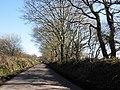 Tree-lined road, near Topshayes Farm - geograph.org.uk - 1737147.jpg