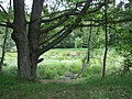 Tricity Landscape Park, Gdynia - 009.JPG