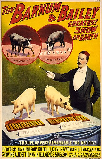 "Ringling Bros. and Barnum & Bailey Circus - Poster from 1898, advertising a ""troupe of very remarkable trained pigs"""