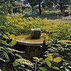 tuin, drinkbak voor vogels - maastricht - 20353915 - rce