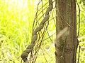 Twist Branch (6076177621).jpg